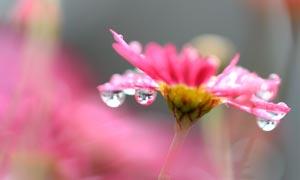雨后挂满水滴的红色小花摄影图片