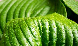 植物叶子上的水滴高清摄影图片