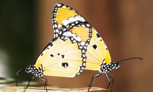 叶子上栖息的蝴蝶高清摄影图片