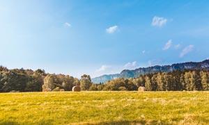 蓝天下的麦田和草堆高清摄影图片