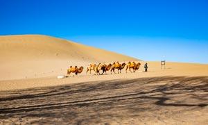 鸣沙山沙漠中行走的驼队摄影图片