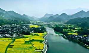 绩溪龙川景区油菜花美景摄影图片