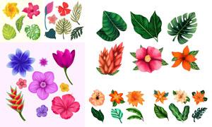 水彩效果植物绿叶花瓣主题矢量素材