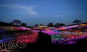 夜晚公园里美丽的彩灯高清摄影图片