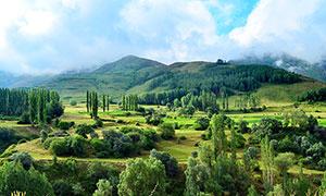 山腳下的綠色樹林高清攝影圖片