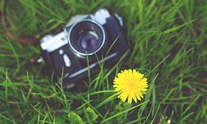 草地上的照相機和小黃花攝影圖片
