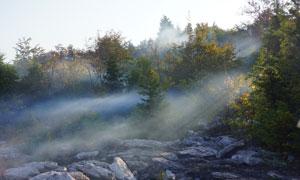 雾气中的山间树丛风光摄影高清图片