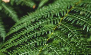 树林中的绿叶蕨类植物摄影高清图片