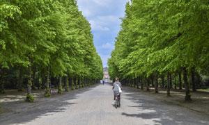 大学校园里的林荫道路摄影高清图片