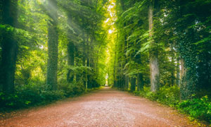 道路旁的郁郁葱葱大树摄影高清图片