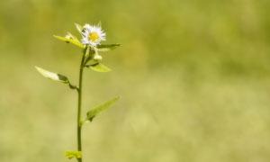 陽光下盛開的小朵菊花攝影高清圖片