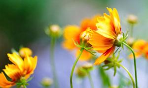 風中搖曳著開放的花朵攝影高清圖片