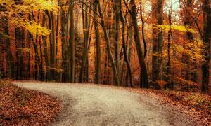 秋天转弯道路树木风光摄影高清图片