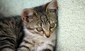 靠着墙壁的可爱小猫咪摄影高清图片