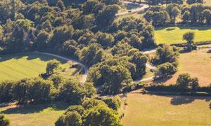 青草地与茂密树丛风光摄影高清图片