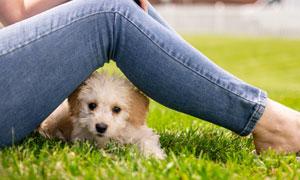 躲起来的可爱小狗特写摄影高清图片