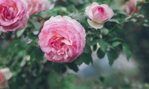 花卉植物开出来的漂亮花朵高清图片