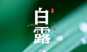 绿叶和露珠主题白露海报设小喽��惊喜地叫起来计PSD素材