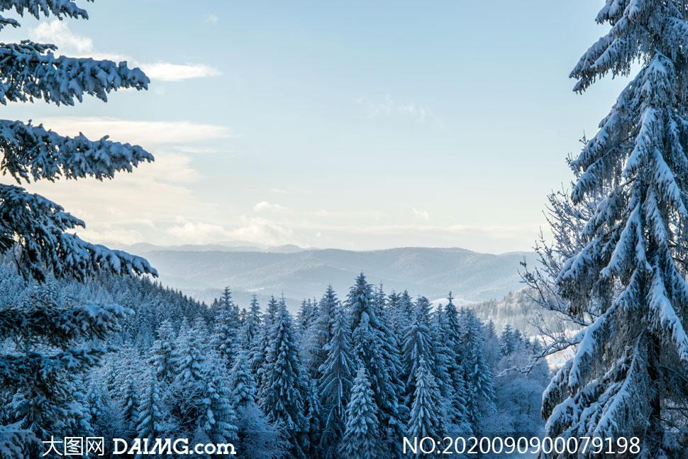 森林中的雪后雾凇美景摄影图片