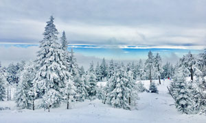 山中美丽的雪松景观摄影图片
