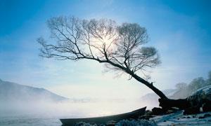 清晨湖边枯树雪后美景摄影图片