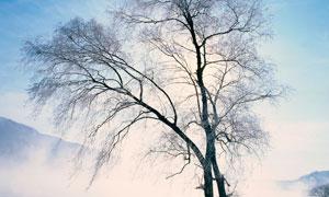 清晨雪后湖边大树景观摄影图片