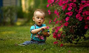 在花坛边做在草地上的小男孩摄影图片