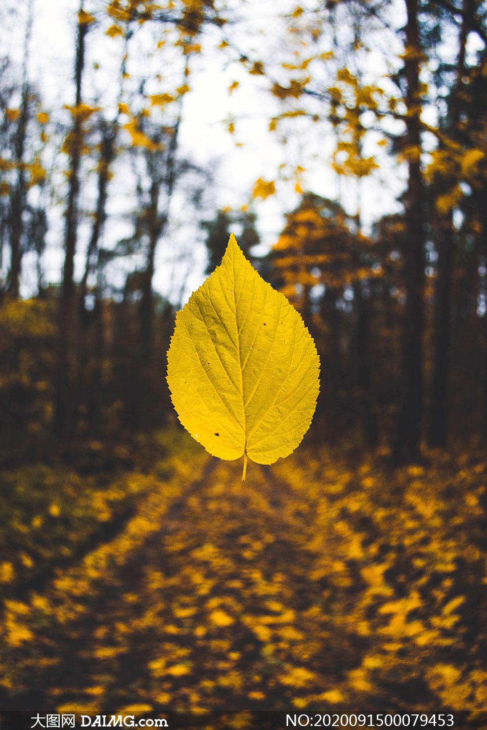 秋季飘落的树叶特写高清摄影图片