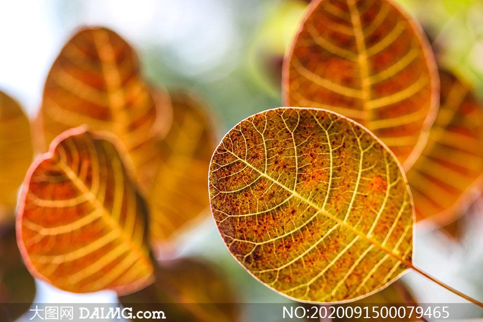 秋季圆形树叶特写高清摄影图片