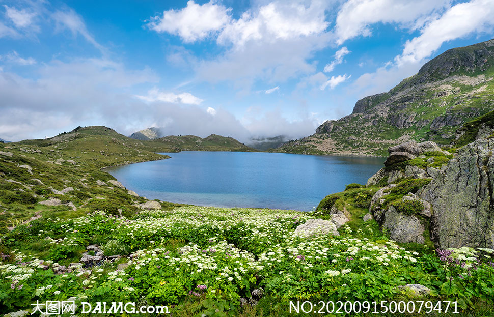 蓝天白云下的湖泊和野花摄影图片