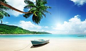 海边停靠的小舟和椰树摄影图片