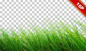 青青草地前景装饰适用高清图片素材