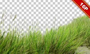 花草丛等前景装饰适用高清图片素材