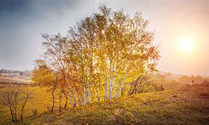 秋季早晨田園樹木美景攝影圖片