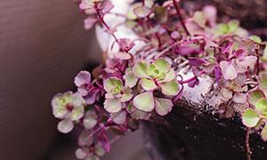 花坛中伸出来的多肉植物摄影图片
