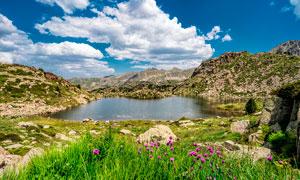 藍天白云下的湖泊和花草攝影圖片