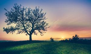 傍晚田園美麗的大樹景觀攝影圖片