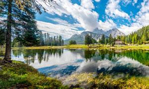 藍天白云下的湖泊和大樹攝影圖片