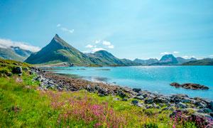 藍天下的湖泊和野花攝影圖片