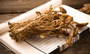 书本上的干茶树菇高清摄影图片