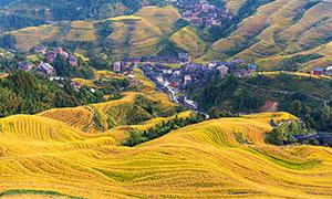 秋季美丽的金色梯田美景摄影图片