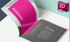 多种用途的作品集画册页面布局模板
