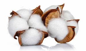 白色棉花球特写高清摄影图片