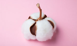 白色棉花球特写摄影图片