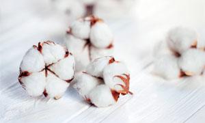 木地板上的白色棉花球摄影图片
