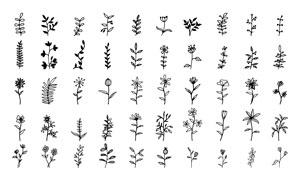 五十款黑白手绘风花草植物矢量素材