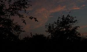 黄昏天空晚霞树木风光摄影高清原片