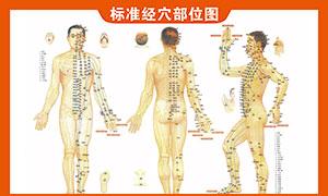 人体标准经穴部位图PSD素材