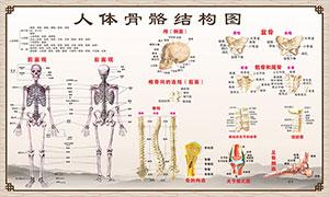 人体骨骼结构图展板矢量素材