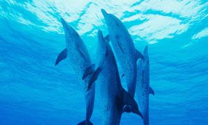 海底下的海豚群攝影圖片